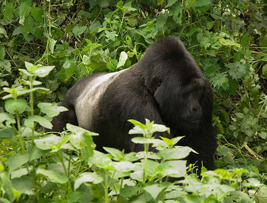 Image result for bwindi impenetrable national park